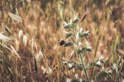 grass outdoor plants field bee