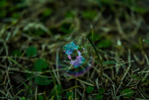 bubbles water reflection green grass