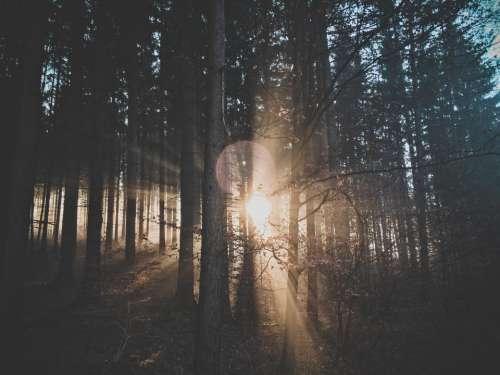 nature landscape trees forest sun