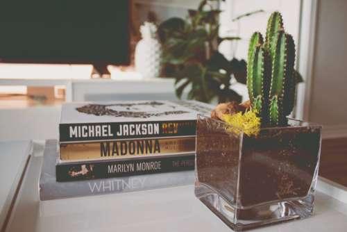 stack books interior design cactus plant
