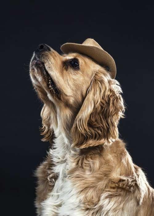 A Dog In A Cowboy Hat Photo