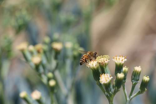 Bee And Nectar Photo