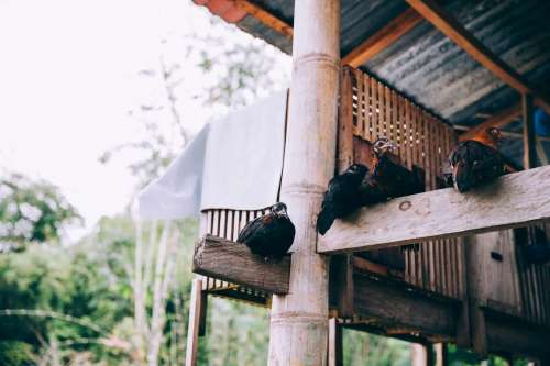 Birds Perched On Wood Beams Of Indonesian Temple Photo