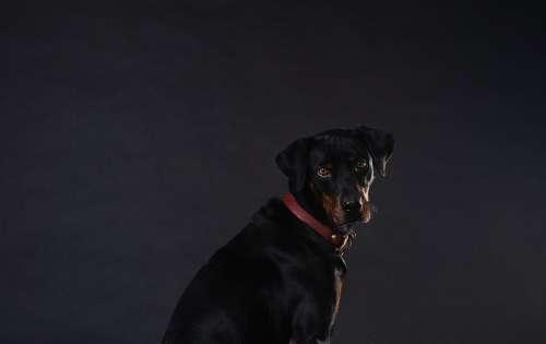 Brown Eyed Puppy Photo
