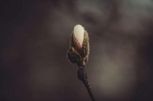 Colorful Magnolia Pedals Emerge Photo