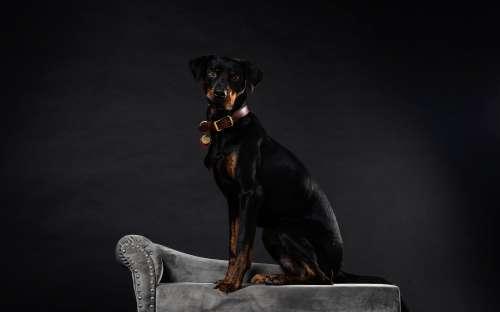 Dog Photo Posing Photo