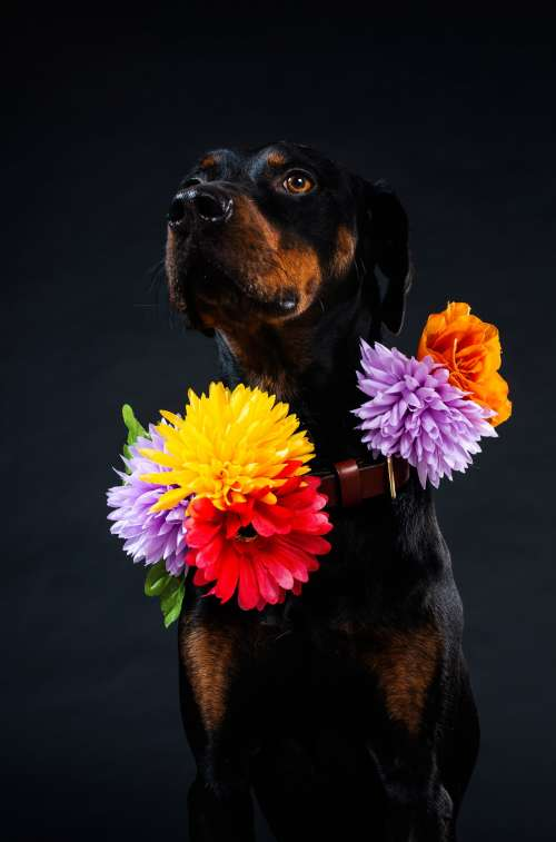 Flowers In My Collar Photo
