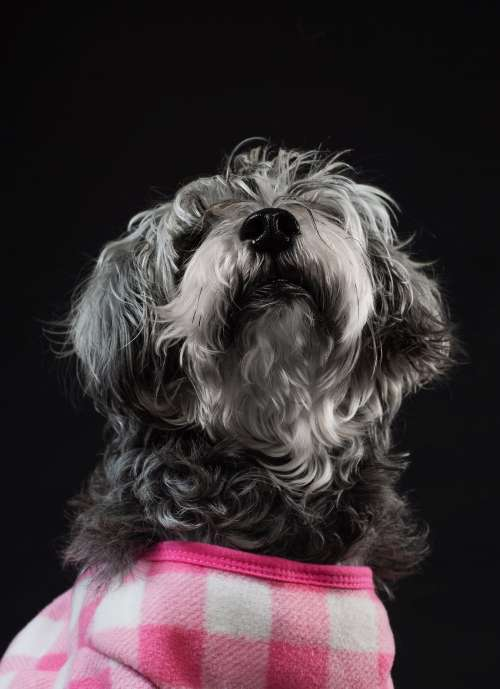 Puppy In Plaid Photo