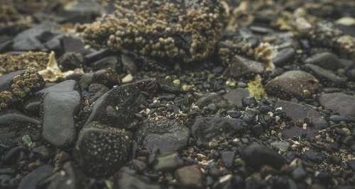 Sea-Soaked Pebbles And Rocks Photo