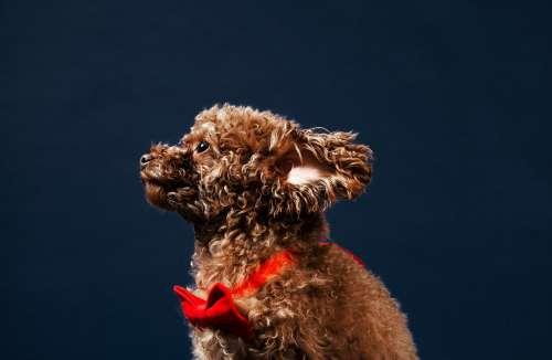 Super Puppy Photo