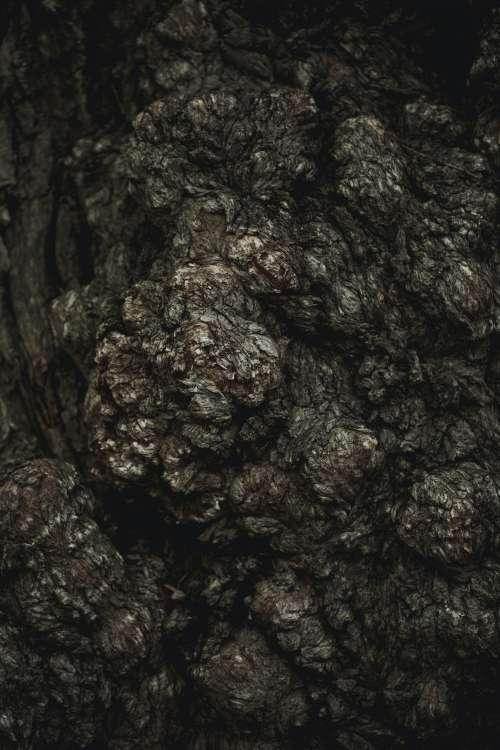 Tree Bark Texture Close Up Photo