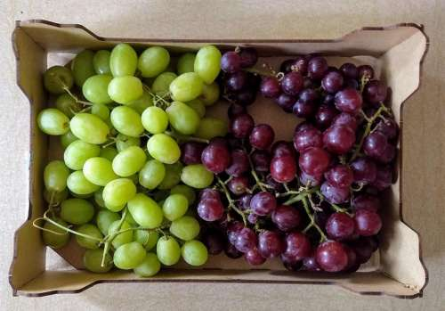 grape grapes red grapes green grapes bunch of grapes