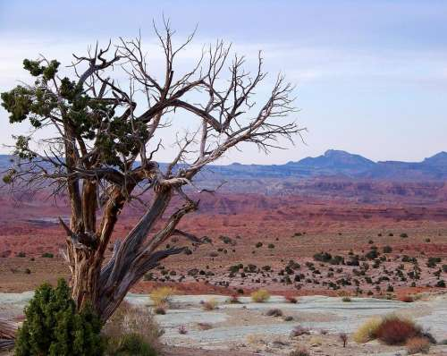 canyon desert tree dry arid