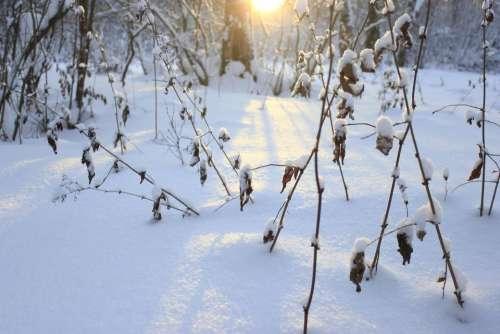 winter snow landscape tree cold