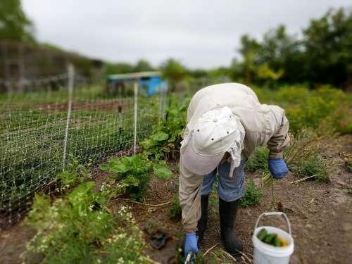 farmer pick farm garden forage
