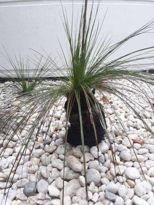palm tree garden landscape shrub design