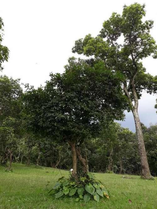 Trer outdoors Nepal