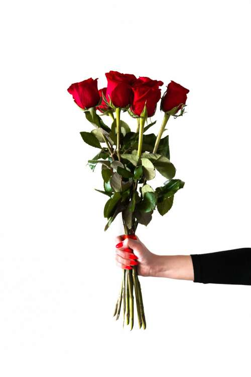 Red Roses in Woman's Hand Free Photo