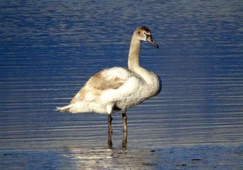 Animal Seabird Wildlife Seaside Bird