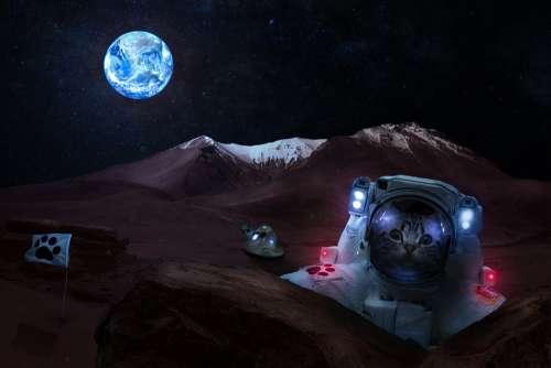 Apollo Cat Moon Moonlight Composing Photoshop