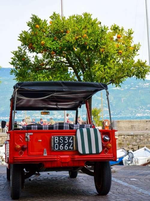 Auto Jeep Oranges Orange Tree All Terrain Vehicle