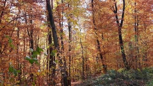 Autumn Forest Nature Trees Mood Fall Foliage