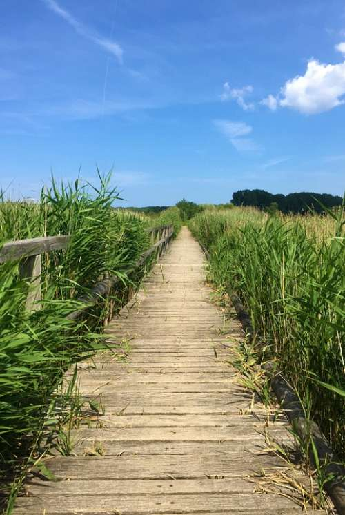 Away Nature Landscape Trail Summer Rest Reed