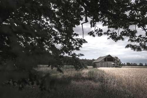 Barn Rye Tree Field Farm Agriculture Straw Rural