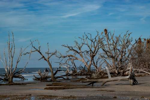 Beach Driftwood Sky Nature Coast Sand Sea Wood