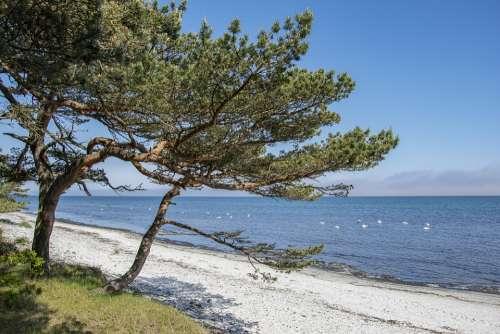 Beach Baltic Sea Coast Sand Vacations Water