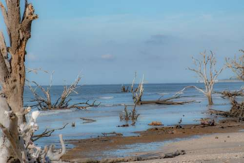 Beach Driftwood Unpopulated Nature Coast Water