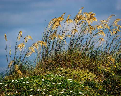 Beach Grass Landscape Sea Nature Summer Dunes