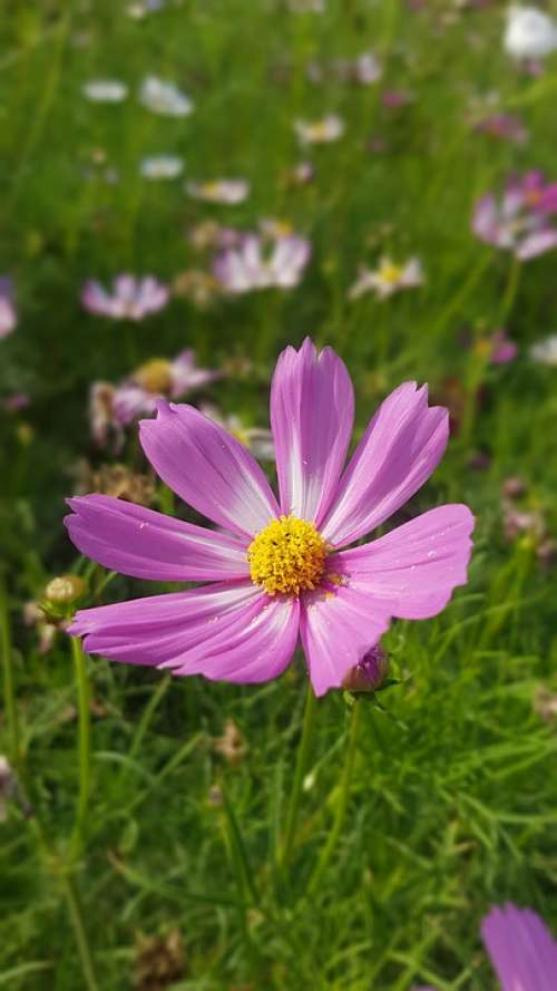 Beauty Flower Color Season Bright Petals Floral