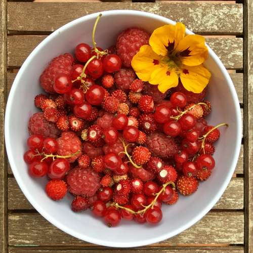 Berries Summer Fruit Red Fresh Vitamin