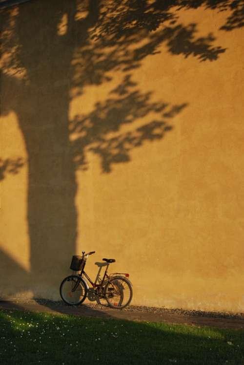 Bike Grass Wall Tree Shadow A Joke