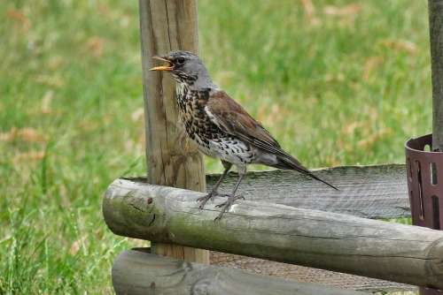 Bird Nature Summer Park Animals Beak Pen