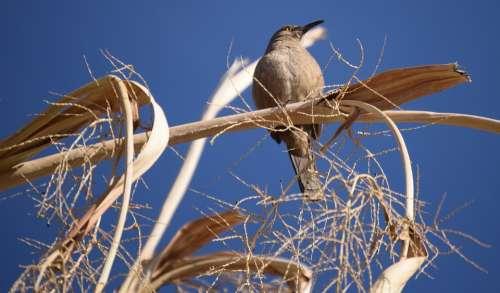 Bird Nature Feather Blue Wildlife