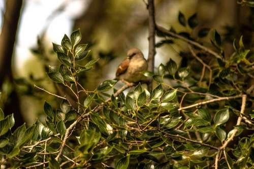 Bird Swallow Swallows Animal Nature Peace