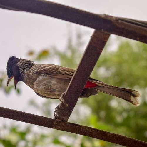 Bird Nature Animal Feather Wildlife Spring Garden