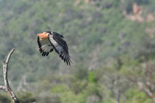 Bird Nature Animals Flight Wings