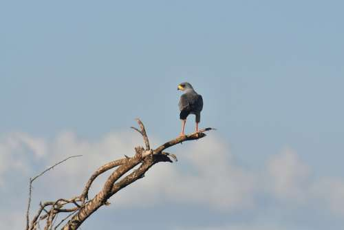 Bird Nature Animals