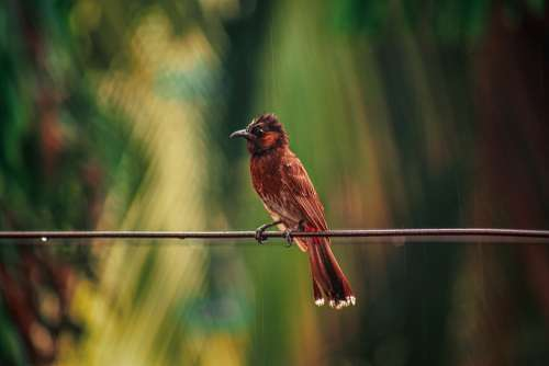 Bird Wildlife Natural Nature Passion