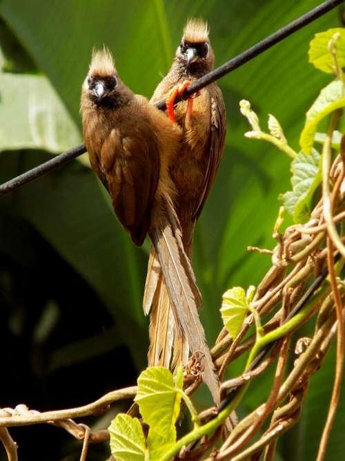 Birds Birdsphoto Birdspicture Animals