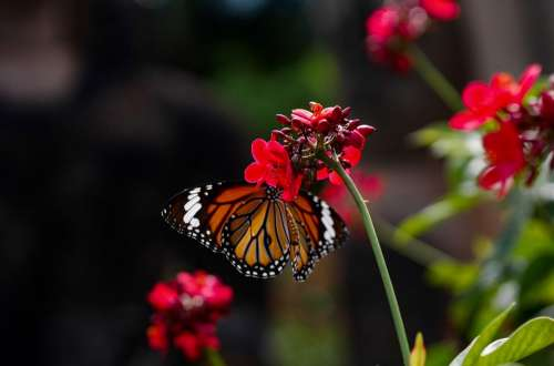 Butterfly Nature Flower Summer Wings Insects