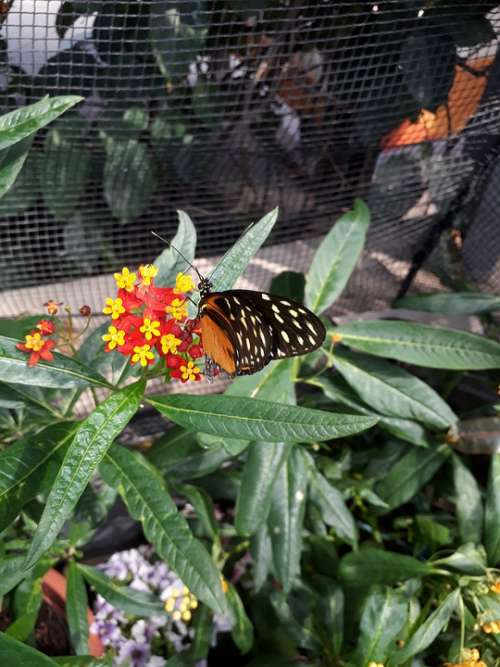 Butterfly Nature Insect Summer Animal Wing