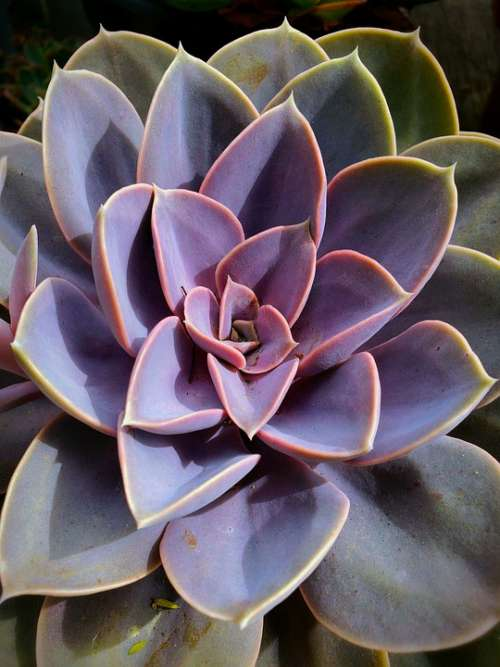 Cactus Succulent Colorful Geometric Delicate Spiky