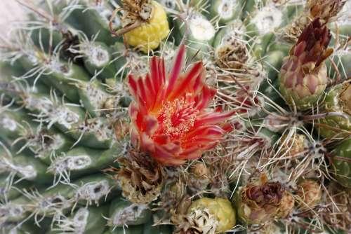 Cactus Usa National Park Arizona