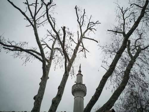 Cami Minaret Tree Landscape Architecture Muslim