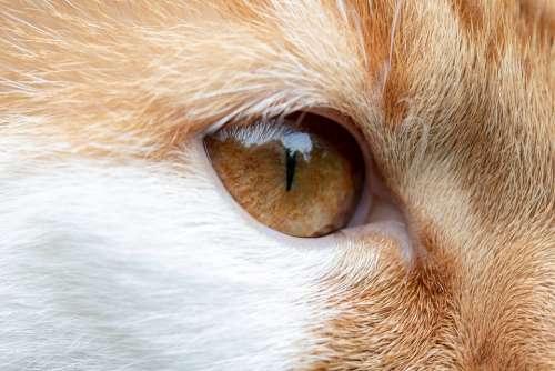Cat Eye Cat'S Eye Face View Domestic Cat Head