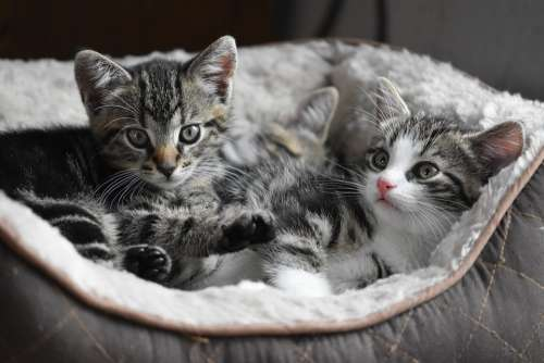 Cat Kittens Small Pet Kitten Cute Charming Sweet
